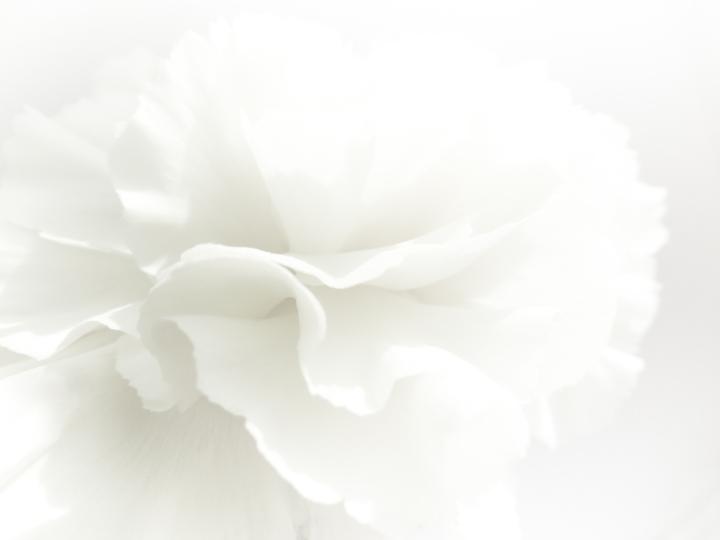 serviis_white